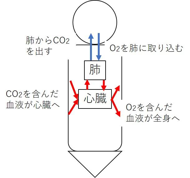 酸素と血液の流れ
