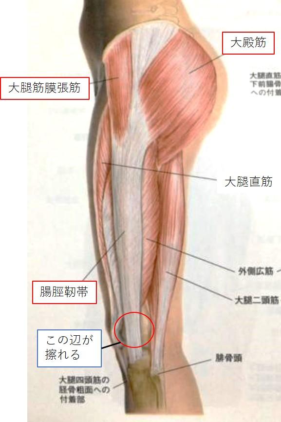腸脛靭帯(足を外側から見た図)