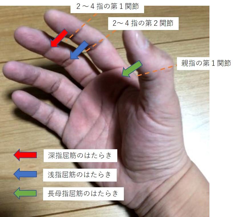 握力に使う前腕の筋肉